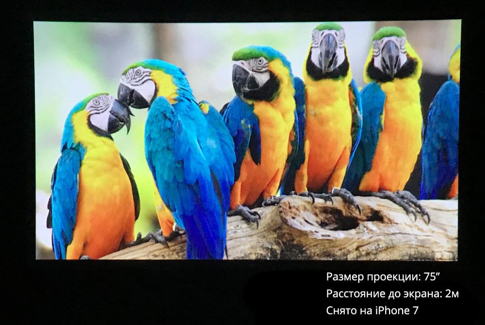 Everycom S10 проекция